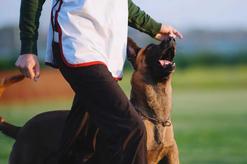 Czym zajmuje się behawiorystyka zwierząt? Praktyczny poradnik