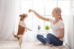 Naturalne przysmaki dla psa - dlaczego warto je kupować?
