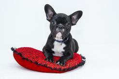 Akcesoria dla czworonogów - naturalne gryzaki dla psa to najlepszy wybór