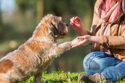 CBD dla zwierząt, czyli o tym jak CBD może pomóc naszym pupilom