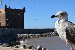 Polowanie na ptaki – od zdobywania żywności do fanaberii