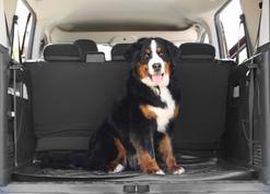 Mata dla psa do samochodu krok po kroku. Oto najlepsze modele