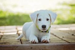 Jak uszczęśliwić psa? Czyli kilka słów o jego naturalnych potrzebach