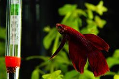 Jaka powinna być temperatura wody w akwarium? Praktyczny poradnik