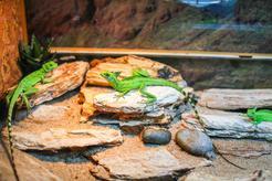 Terrarium dla gekona - opis, wymiary, wyposażenie, porady