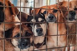 Jaką karę przewiduje prawo za znęcanie się nad zwierzętami? Objaśniamy przepisy