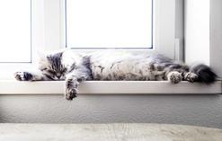 Udar cieplny u kota - jakie są objawy przegrzania i co robić?