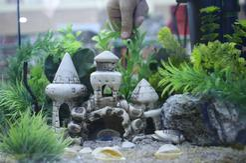 TOP 5 ozdób do akwarium. Wybieramy najciekawsze dekoracje