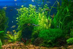 TOP 10 chorób ryb akwariowych - objawy, rozpoznanie, leczenie