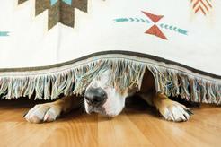 Co zrobić, gdy pies boi się burzy? Wyjaśniamy krok po kroku