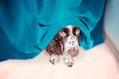 Jak pomóc domowemu zwierzakowi, który panicznie boi się burzy?