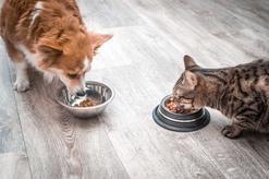 Białko w diecie psa i kota - co to są aminokwasy, strawność białka oraz jakie źródła białka są najlepsze?
