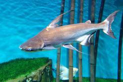 Jak wygląda rekin akwariowy? Wyjaśniamy krok po kroku