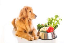 Witaminy w diecie psa - oznaki niedoborów lub przedawkowania