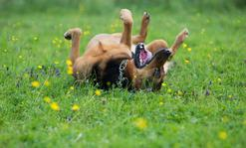 Jaki jest najlepszy probiotyk dla psa? Wyjaśniamy