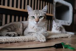Na co zwrócić uwagę, kupując drapak dla kota?