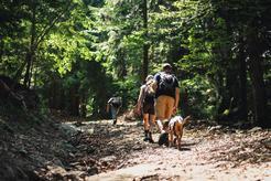 Jakie buty trekkingowe na wycieczkę ze zwierzakiem?
