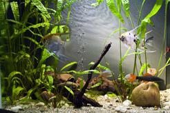 Skimmer do akwarium - opis, działanie, producenci, cena, porady