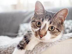 Odkłaczanie kota krok po kroku – jak zrobić to prawidłowo?