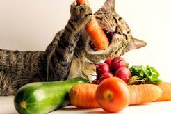 Zdrowe żywienie kota – jak zapobiegać otyłości?