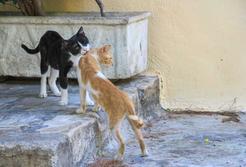 Jak zmienia się kot po kastracji? Wyjaśniamy krok po kroku