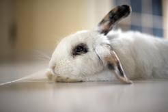 TOP 5 najczęstszych chorób królików – zobacz opisy objawów