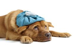 3 najczęstsze choroby neurologiczne u psów
