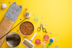 Wyprawka dla kota krok po kroku – kompletna lista produktów