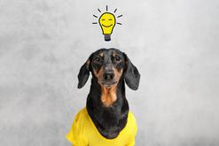 10 najmądrzejszych ras psów - opinie, charakter, wymagania