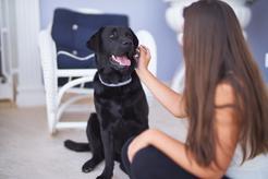 TOP 10 najpopularniejszych ras psów - informacje, opinie, ceny