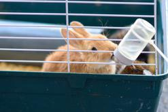 3 najlepsze poidła dla królików – który pojnik warto kupić?