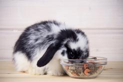 Najlepsza karma dla królika – rodzaje, ceny, opinie, porady