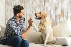 Oryginalne imiona dla psa - sprawdź, jak nazwać pupila