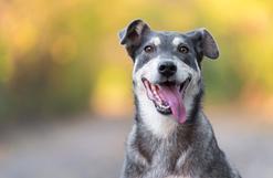 10 najlepszych imion dla psa samca – pomagamy wybrać imię