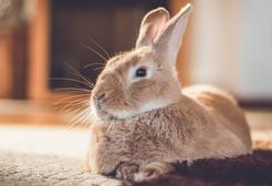 Jak zrobić wybieg dla królika? Przedstawiamy krok po kroku