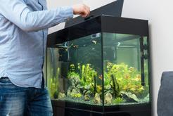 Jak przygotować akwarium słodkowodne? Wyjaśniamy krok po kroku