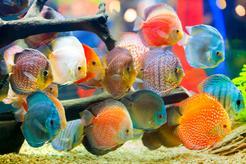 Ryby paletki – opis, wymagania, pielęgnacja, porady praktyczne