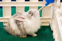 TOP 4 akcesoria dla królika – zobacz, co ułatwia opiekę nad królikiem