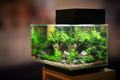 Jaki żwirek do akwarium sprawdza się najlepiej? Oto 3 najlepsze rodzaje podłoża