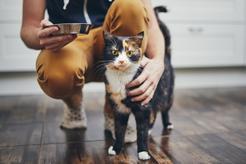 Kot domowy – rodzaje, opieka, charakterystyka, porady