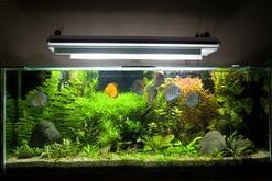 Gatunki rybek akwariowych – oto 7 najciekawszych ryb do akwarium