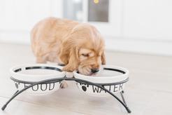 Jak wybrać stojak na miski dla psa? 3 najlepsze modele