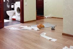 Jak karać kota? 4 skuteczne sposoby na karcenie kota