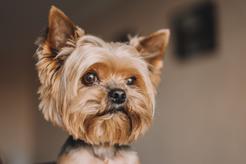 TOP 10 ras psów - opisy, charakter, wymagania, porady, opinie