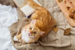 Jak długo żyją koty? Zobacz, ile lat średnio żyją koty