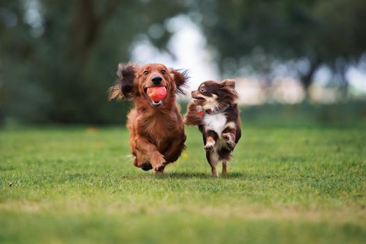 psy do towarzystwa