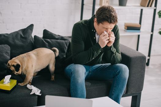 psy dla alergików