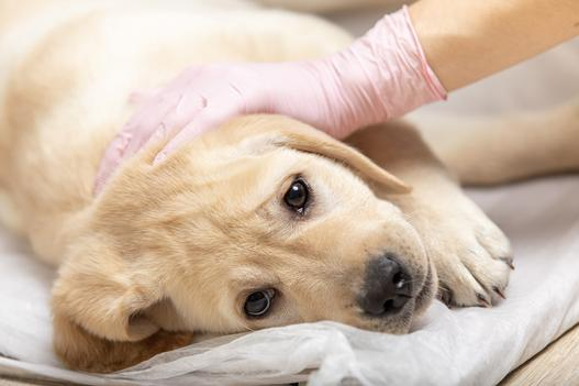 choroby zakaźne u zwierząt