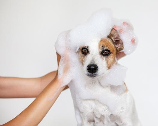 kosmetyki dla zwierząt