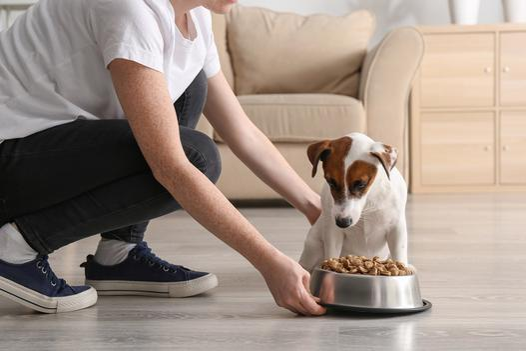 akcesoria do karmienia zwierząt